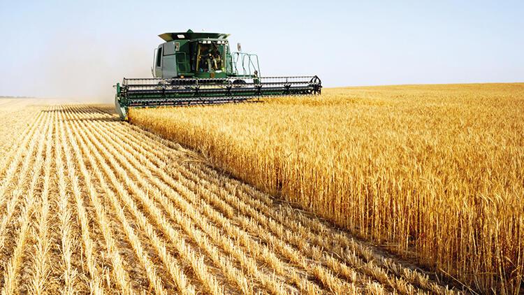 Buğdayda rekolte beklentisi 17.5 milyon ton