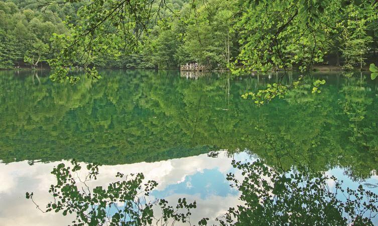 Ormanda güzel bir gün…