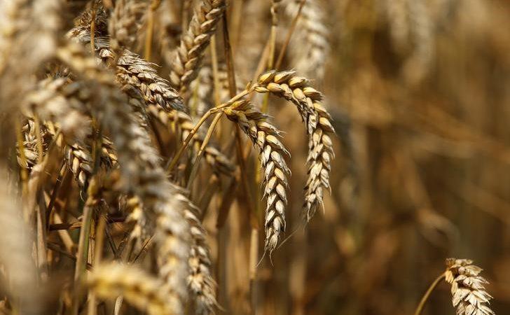 Tahıl ve baklagil başta olmak üzere tarım ürünlerinde azalış bekleniyor