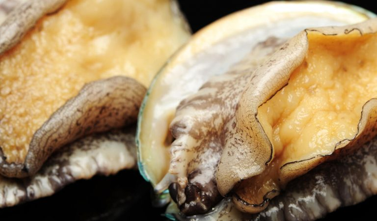 Beyaz denizkulaklarının neslini aşk iksiri kurtaracak